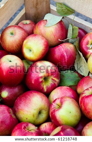Crate of fresh apples waiting to be bagged at a farmer's market. - stock photo