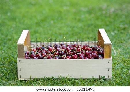 Crate of Juicy cherries. - stock photo