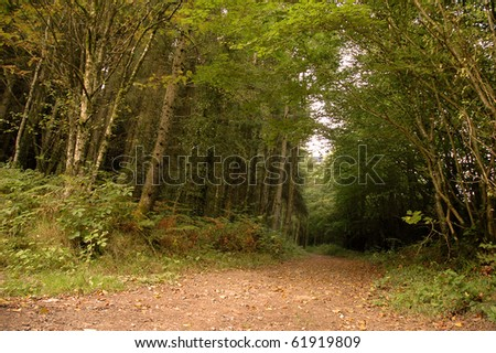 Cratloe Forest Park, Ireland