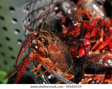 Crawfish trying to escape from being boiled - stock photo