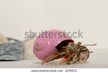 Crawling Hermit Crab - stock photo
