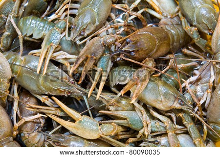 Crayfish. - stock photo