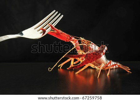 Crayfish and fork in the fight