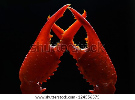 Crayfish claws on a black background - stock photo