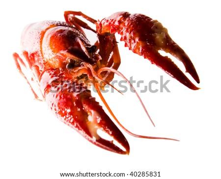 Crayfish diagonal isolated on white - stock photo