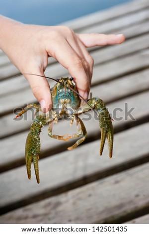 crayfish in hand - stock photo