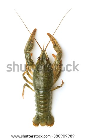 Crayfish on a white background - stock photo