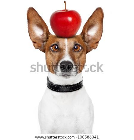crazy dog with big lazy eyes - stock photo