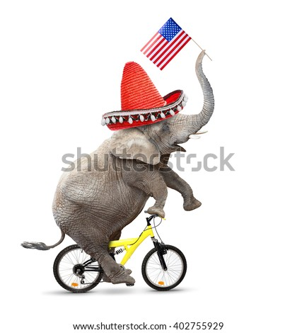 Crazy elephant with sombrero and american flag driving a bicycle. Republican elephant going to elections. Digital artwork on political theme. - stock photo