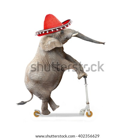 Crazy elephant with sombrero driving a push scooter. Republican elephant going to elections. Digital artwork on political theme. - stock photo
