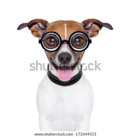 crazy silly dog with funny glasses and tongue ears down