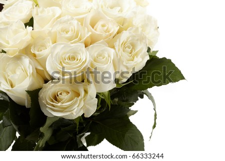Cream roses - stock photo