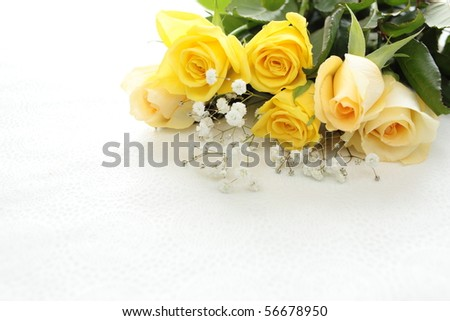 Cream white and yellow roses isolated on white background - stock photo