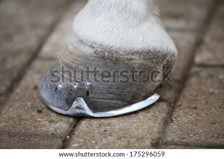 Creamed horse hoof right after the farrier finished to put on a perfectly fitted horseshoe - stock photo