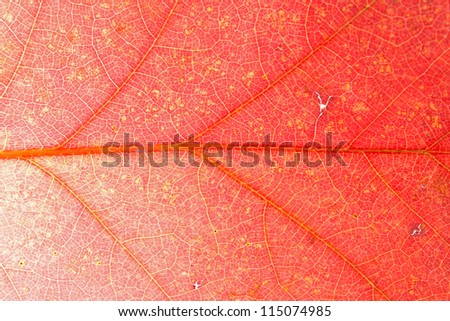 Creative background with leaf pattern