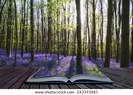 Creative concept image Beautiful landscape of Spring bluebells in forest - stock photo