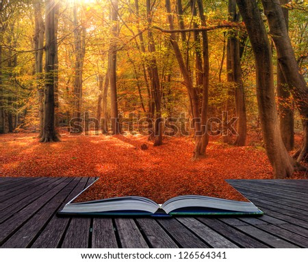 Creative concept image if Autumn Fall forest in pages of book