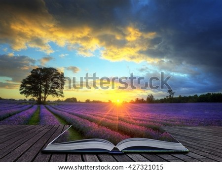 Creative concept image of beautiful image of stunning sunset with atmospheric clouds and sky over vibrant ripe lavender fields in English countryside landscape - stock photo