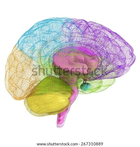 Creative concept of the human brain - stock photo