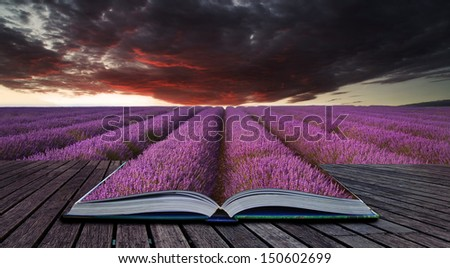 Creative concept pages of book Beautiful image of lavender field Summer sunset landscape under red stormy sky - stock photo