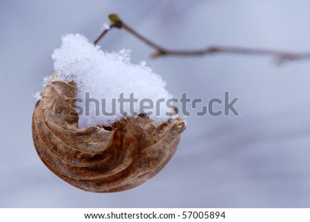 Creative idea shot of leaf with snow as a ship - stock photo