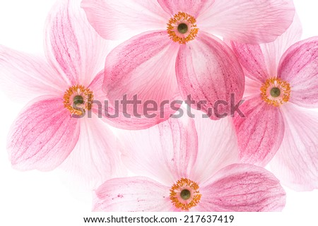 creative macro picture of pink flowers. selective focus - stock photo