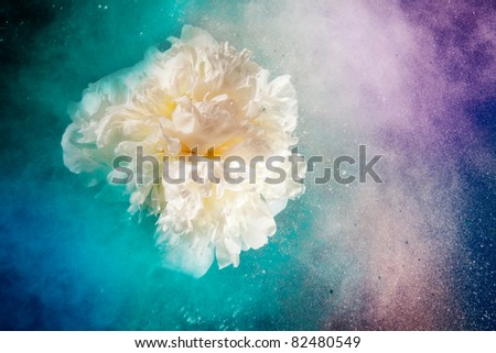 Creative shoot of white peony flower and powder explosion that looks like nebula or galaxy - stock photo