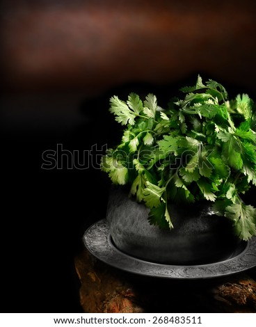 Creatively lit and selectively focused image of a fresh cilantro or coriander plant against a dark, rustic background. Concept image for Indian cooking. Copy space. - stock photo