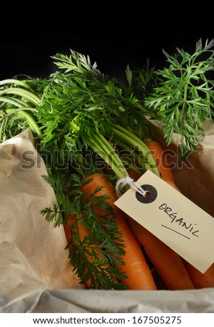 Creatively lit image of freshly pulled organic carrots against a dark background. Copy space. - stock photo