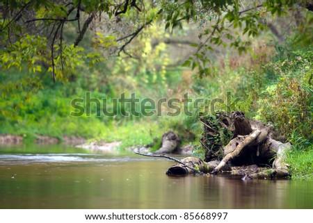 creek - stock photo