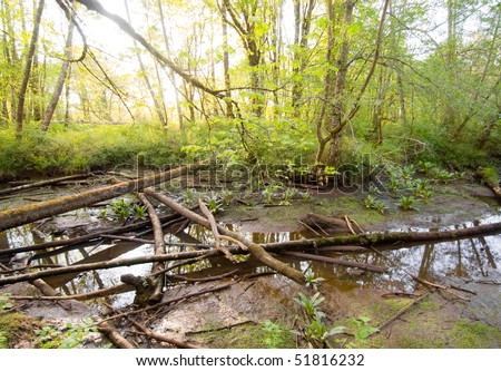 creek bed, fallen trees and swamp water - stock photo