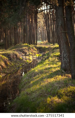 Creek in a pine forest. Shallow depth of field - stock photo
