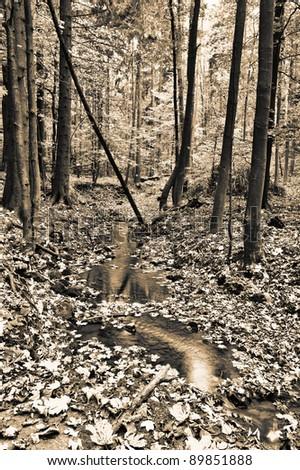 Creek in fall time - sepia toned - stock photo