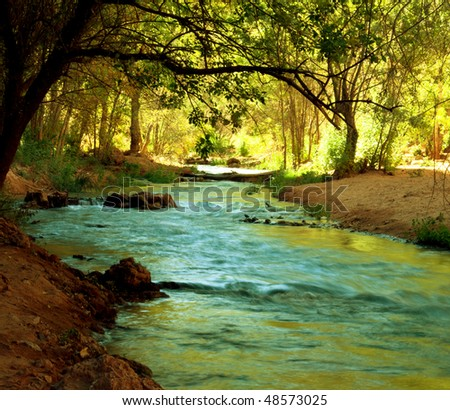 creek in forest - stock photo