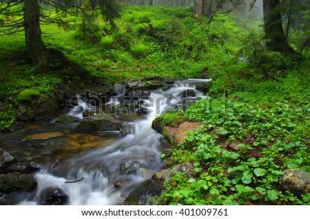 Creek in the woods and trees in the fog - stock photo