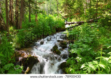creek in wood by summer - stock photo