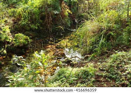 creek in woods - stock photo