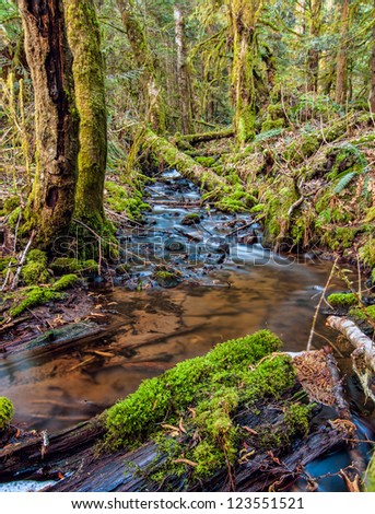 Creek Surrounded by Mossy Trees - stock photo