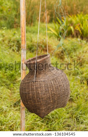 Creel Fish Hung on bamboo wood in a  green grasses  background