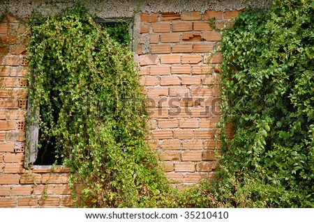 Creeper plant growing through the window of an abandoned house. - stock photo