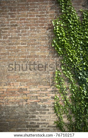 Creeper plant on bricks wall, copy space
