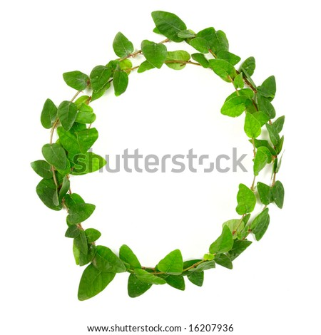 Creeping green plant over white background
