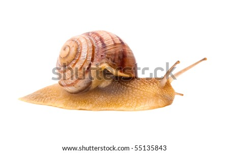 Creeping snail on a white background