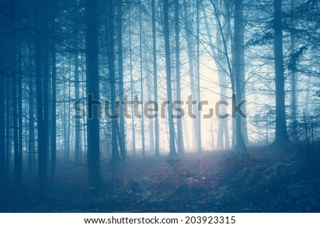 Creepy blue saturated vintage forest trees. Color filter and vintage filter effect used. - stock photo