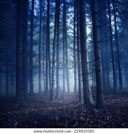 Creepy dark blue saturated vintage forest trees. Color filter and vintage filter effect used. - stock photo