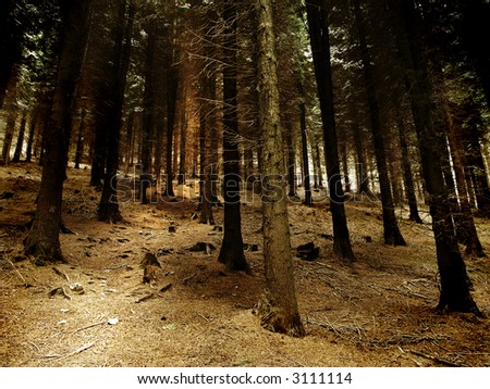 Creepy forest and a path - stock photo