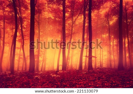 Creepy red over saturated forest trees. Color filter filter effect used. - stock photo