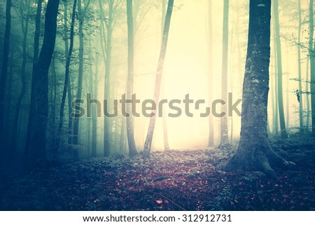 Creepy yellow green saturated vintage foggy forest trees landscape. Color filter and vintage filter effect used. - stock photo