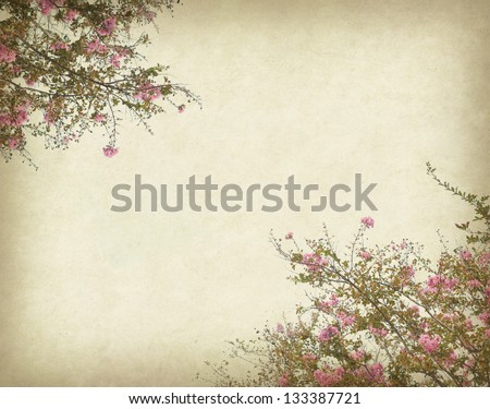 crepe myrtle flowers with old grunge antique paper texture - stock photo