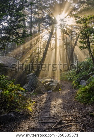 Crepuscular rays over hiking trail in Roan Mountain State Park - stock photo